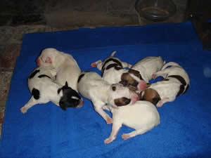 8 Puppies born April 21, 2007