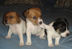 3 Female Puppies