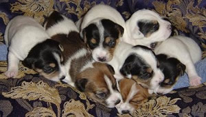 8 puppies born September 15, 2005