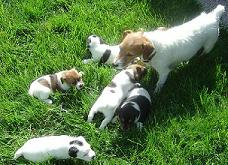 Mother (Tess)with puppies